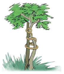 Orthopaedic Tree Symbol Orthopaedic and Podiat...